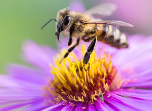 Life Science: Bee and Flower