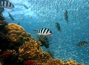 Coral Reef Biodiversity: Unity and Diversity