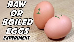 Raw or Boiled Egg Experiment